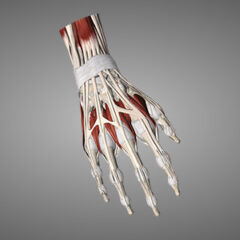 Hand WGZM