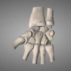 Handgelenk